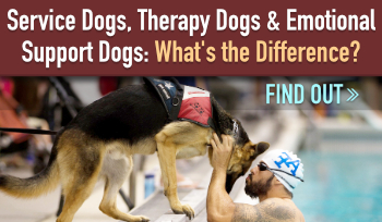Service Dogs, Therapy Dogs, & Emotional Support Dogs: What's the Difference?